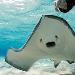 sting_ray_city_is_a_stunning_tourist_attraction_640_03